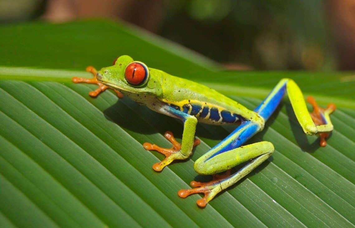 Are Frogs Omnivores