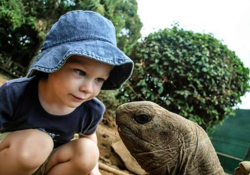 Do Turtles Get Attached To Their Owners