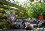 Everything You Need To Know About Cat Licking