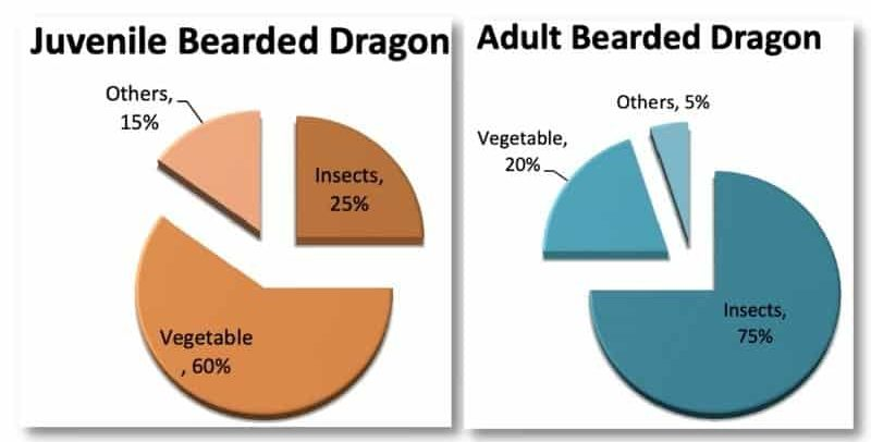 Diet Of A Bearded Dragon